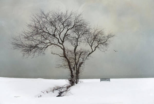 Photograph -  The Midst Of Winter by Robin-Lee Vieira