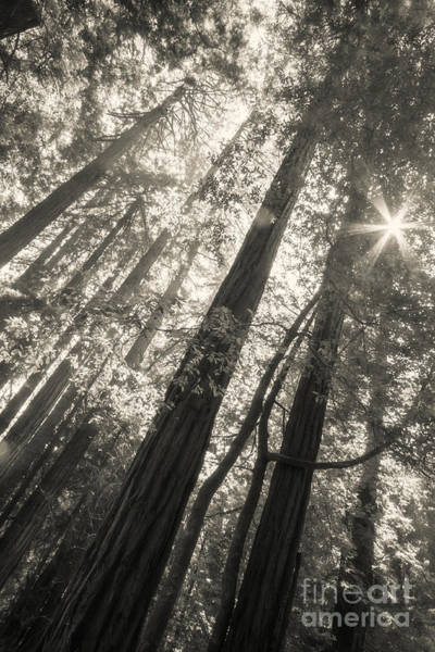 Photograph - In The Woods by Ana V Ramirez