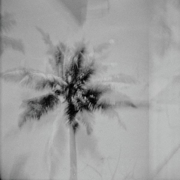 Wall Art - Photograph - India Palm Trees 3 by Rika Maja Duevel