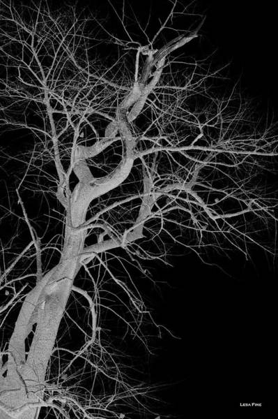 Photograph - Infared Tree Art Twisted Branches Bw by Lesa Fine