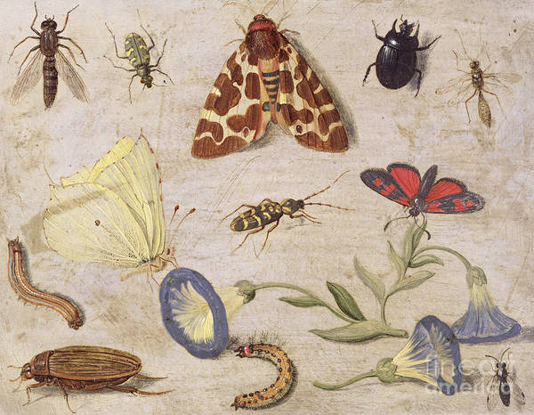 Cabbage White Painting - Insects by Jan Van Kessel