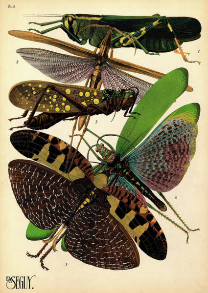 Antenna Painting - Insects, Plate-8 by Painter of the 19th century