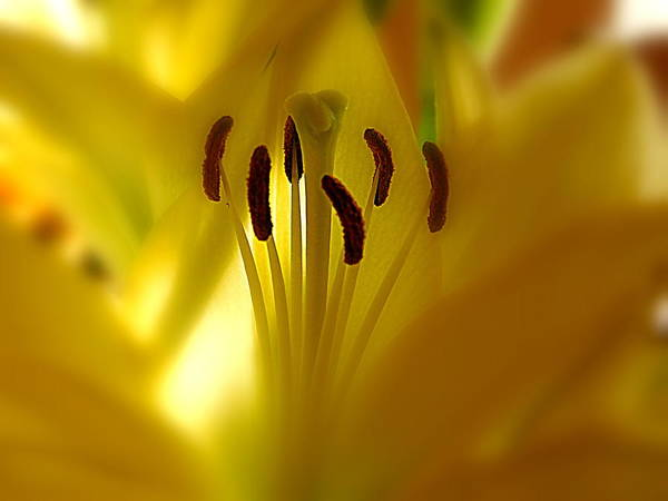 Wall Art - Photograph - Inside A Lily by Arlane Crump