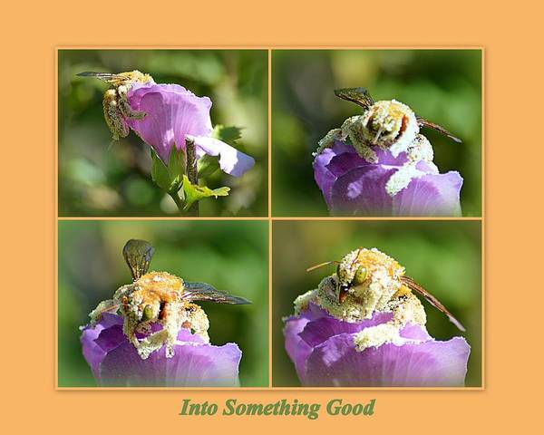 Photograph - Into Something Good by AJ Schibig