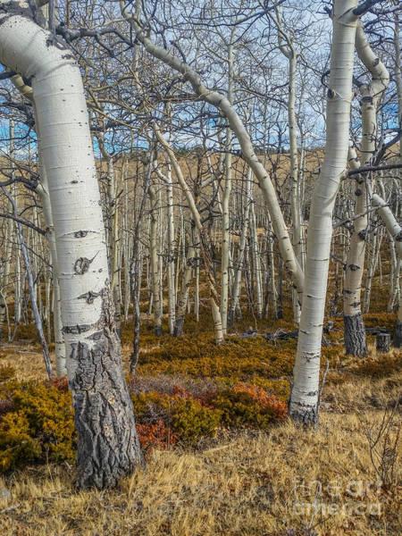 Photograph - Into The Trees by Tony Baca