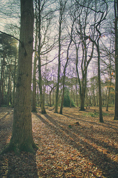 Wall Art - Photograph - Into The Woods by Martin Newman
