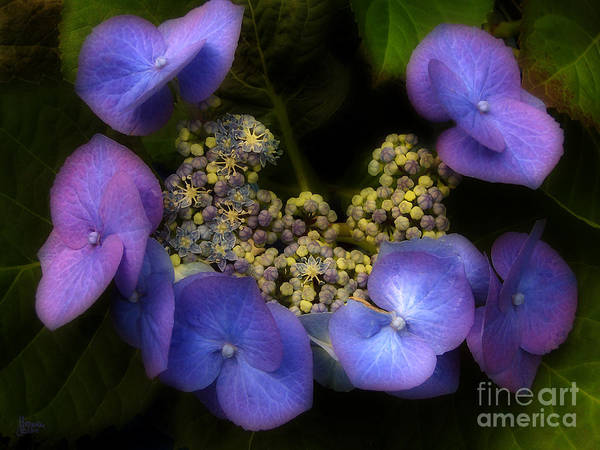 Photograph - Iridescent Blue by Jeff Breiman