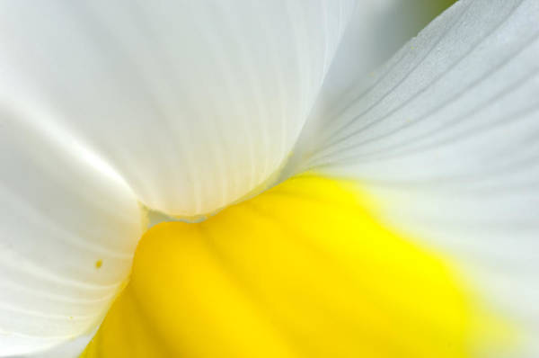 Macor Photograph - Iris by Silke Magino