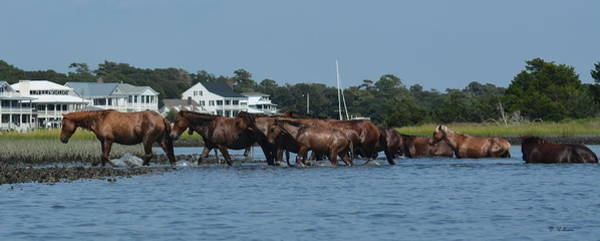 Photograph - Island Ponies by Dan Williams