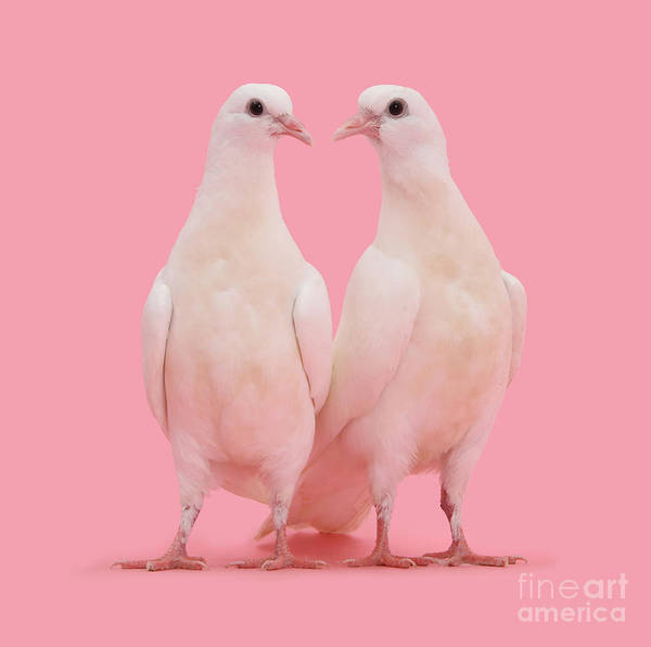 Photograph - It Must Be Dove by Warren Photographic
