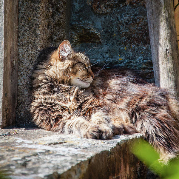 Photograph - It's A Hard Life 2 by Geoff Smith