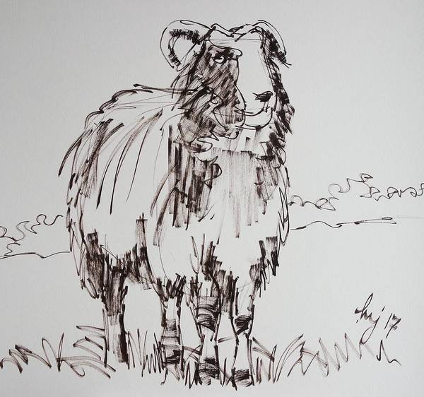 Drawing - Jacob Sheep Drawing by Mike Jory