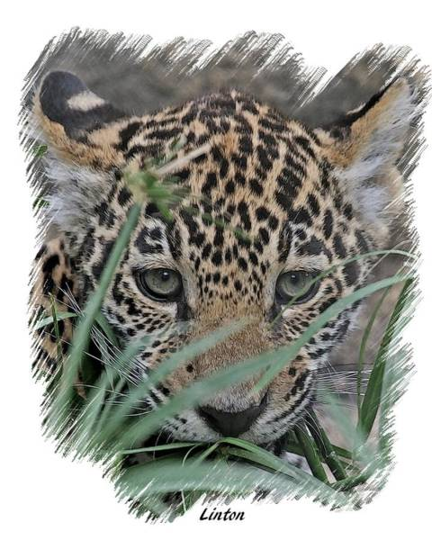Digital Art - Jaguar Cub by Larry Linton