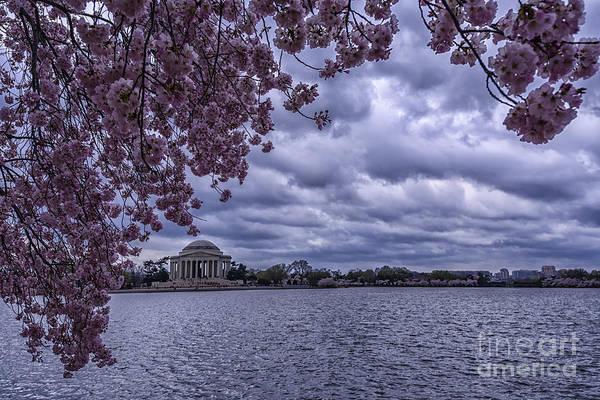 Photograph - Jefferson Memorial Cherry Blossoms by Thomas R Fletcher