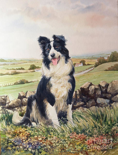 Wall Art - Painting - Jesse The Border Collie by Anthony Forster