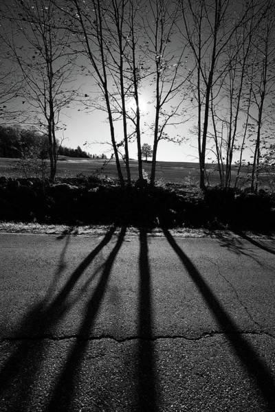 Photograph - John's Tree by Patrick Groleau