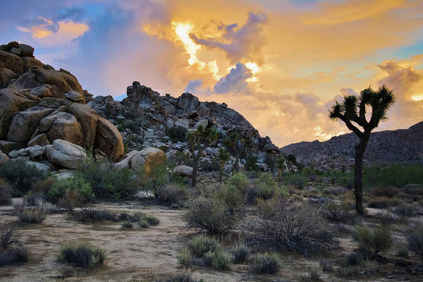 Photograph - Joshua Tree Desert Sunset by Kyle Hanson