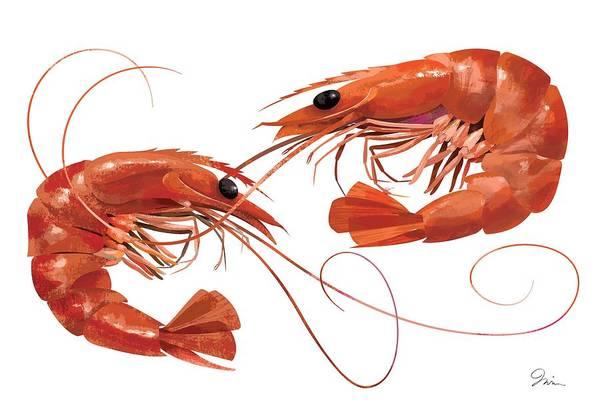 Shrimp Digital Art - Jumbo Shrimp by Trevor Irvin