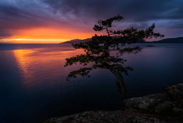 Photograph - Juniper Point by Alexis Birkill