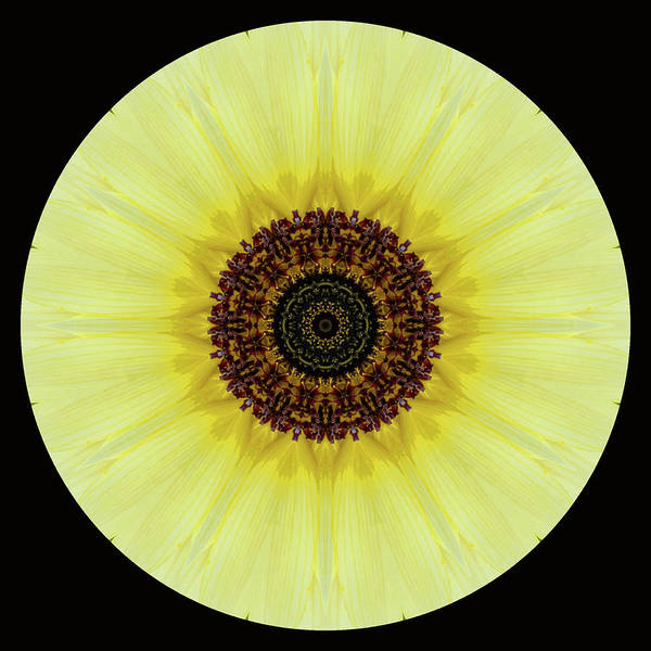 Photograph - Kaleidoscope Image Of An Italian Sunflower by Brenda Jacobs