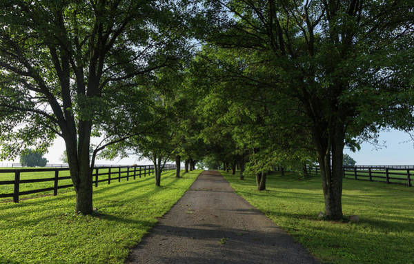 Bluegrass Photograph - Kentucky Bluegrass Country Farm Drive by Bridget Calip