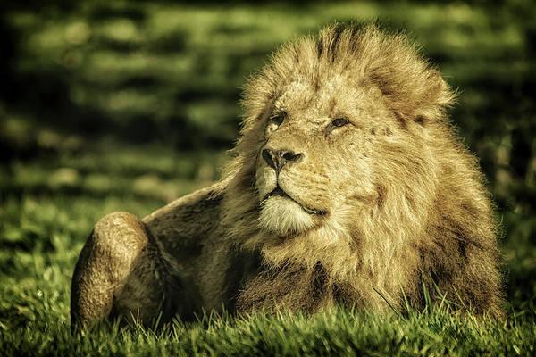 Photograph - King by Chris Boulton