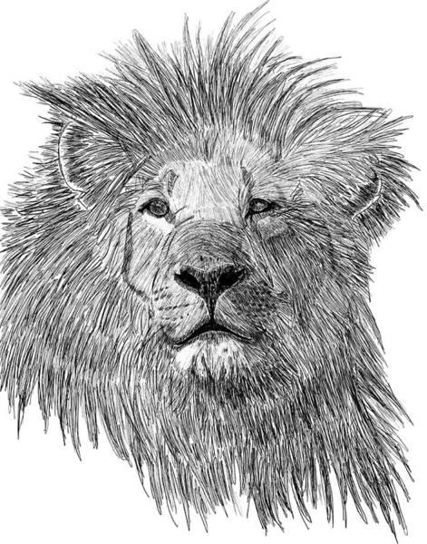 King Of Duba Plains Art Print