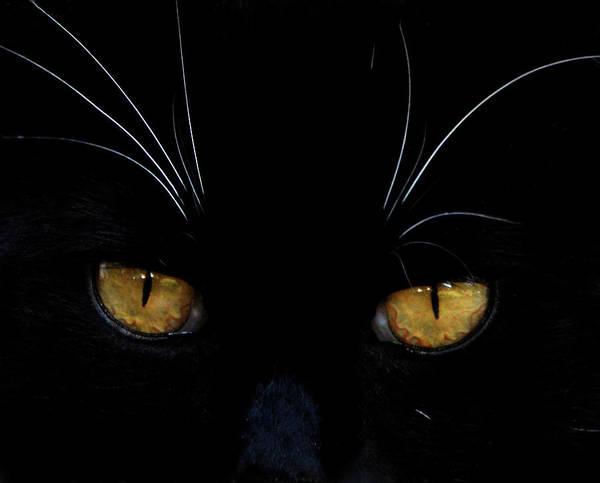 Photograph - Kitkat Portrait by Lesa Fine