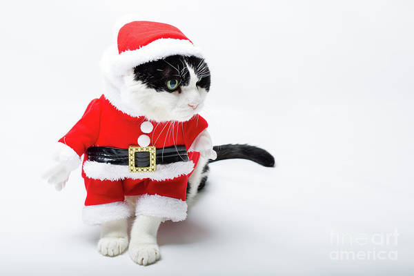 Photograph - kitten Santa Claus by Benny Marty