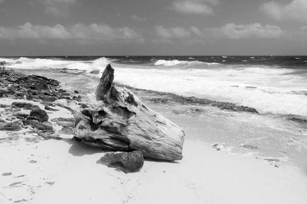 Photograph - Klein Curacao Drift Wood by For Ninety One Days