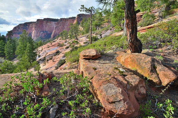 Photograph - Kolob Canyon High Country by Ray Mathis