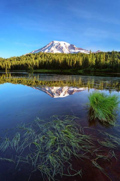 Photograph - Lake Grasses by Michael Blanchette
