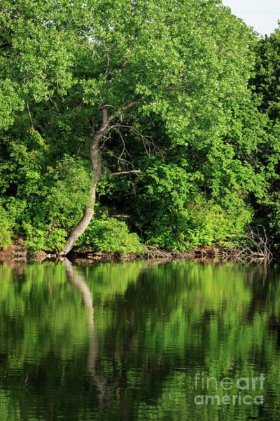 Photograph - Lake Henfer Shoreline by Richard Smith