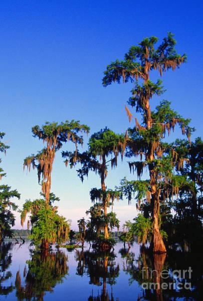 Photograph - Lake Martin Cypress Swamp by Thomas R Fletcher