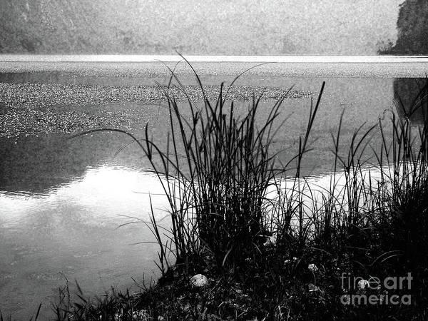 Wall Art - Photograph - Lake Shore by Gaspar Avila