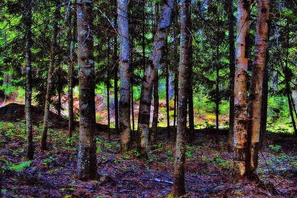 Photograph - Lake Trees by David Patterson