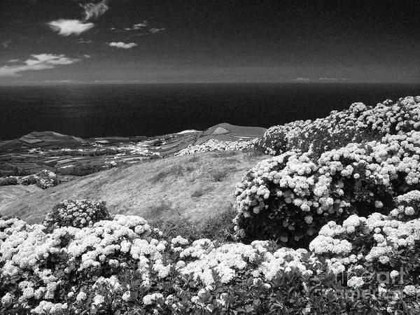 Wall Art - Photograph - Landscape With Hydrangeas by Gaspar Avila