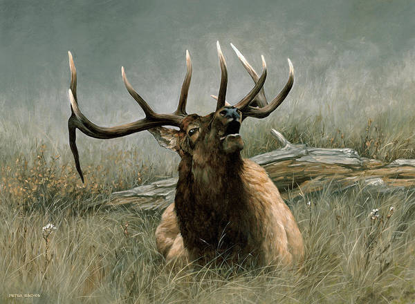 Painting - Lazy Bugle by Peter Eades