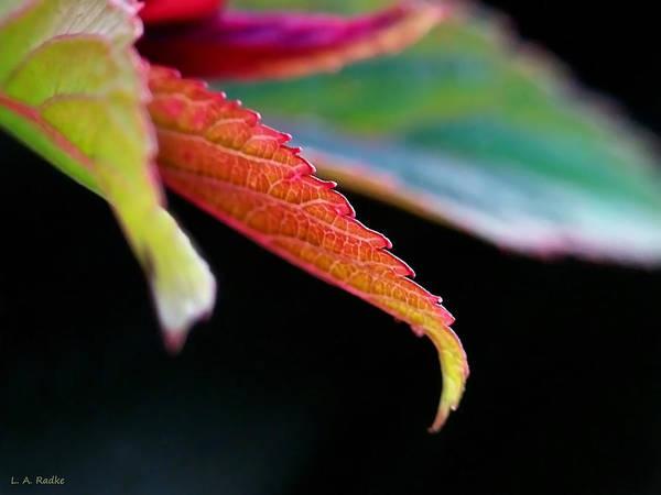 Photograph - Leaf Study Iv by Lauren Radke