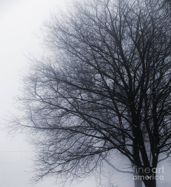 Wall Art - Photograph - Leafless Tree In Fog by Elena Elisseeva