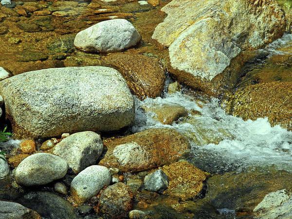 Digital Art - Life Of The Riverbed V2 by Lynda Lehmann