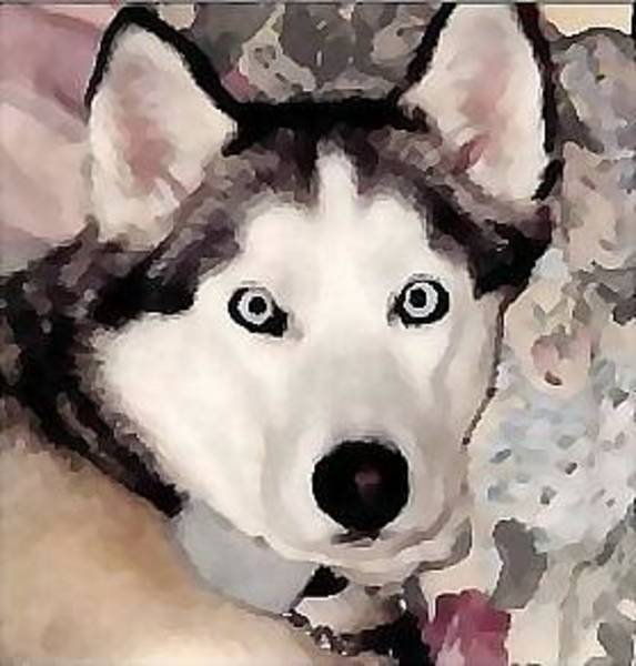 Husky Mixed Media - Light On The Eyes by Brenda Garacci
