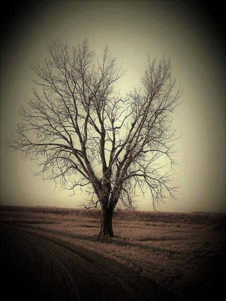 Wall Art - Photograph - Lightning Strike Tree by Toni Grote
