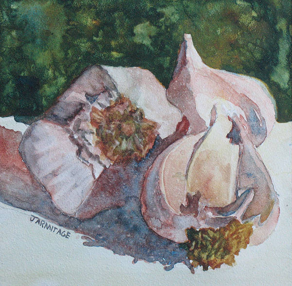 Bulbs Painting - Little Garlic II by Jenny Armitage