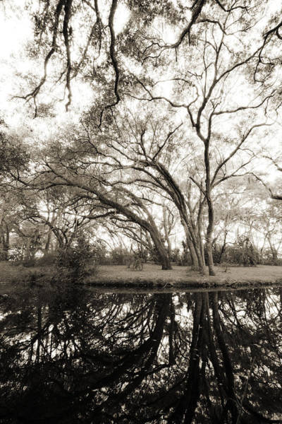 Photograph - Live Oak Reflections by Dustin K Ryan