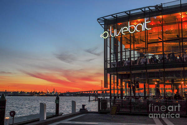 Photograph - Livebait At Sunset by Paul Quinn
