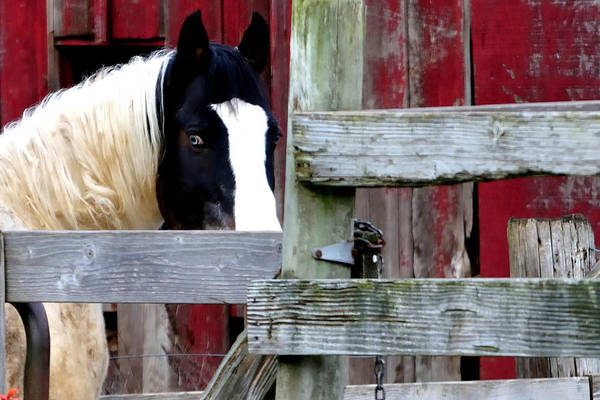 Photograph - Locks Loop Horse 6960 by Jerry Sodorff