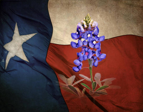 Wall Art - Photograph - Lone Star Bluebonnet by David and Carol Kelly