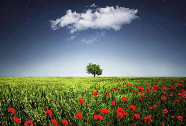 Lone Tree A Poppies Field Art Print