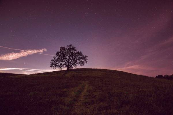 Painting - Lone Tree by Celestial Images